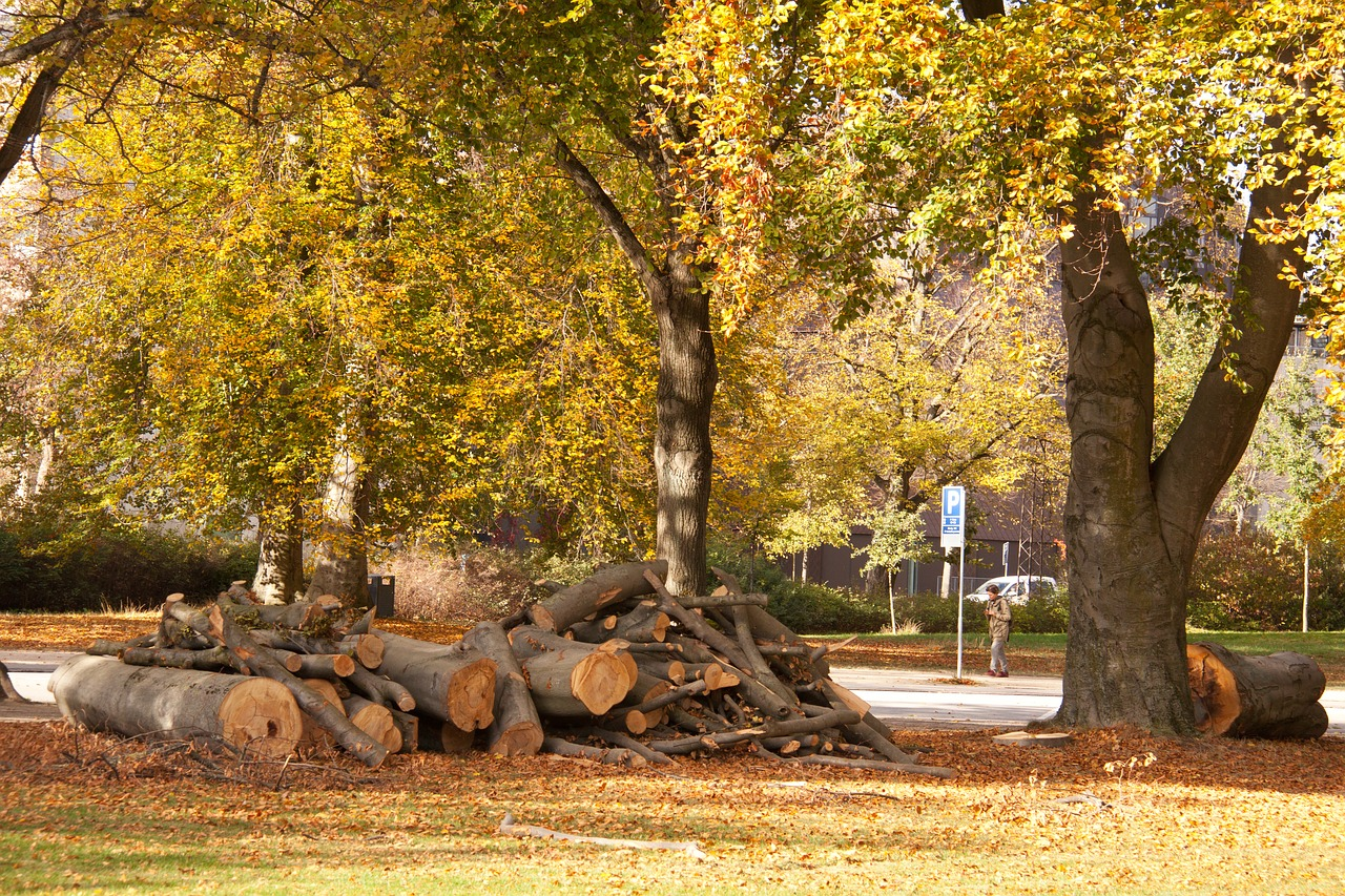 Депутат Самарской губернской думы пожаловался в прокуратуру на вырубку деревьев ради строительства высотки